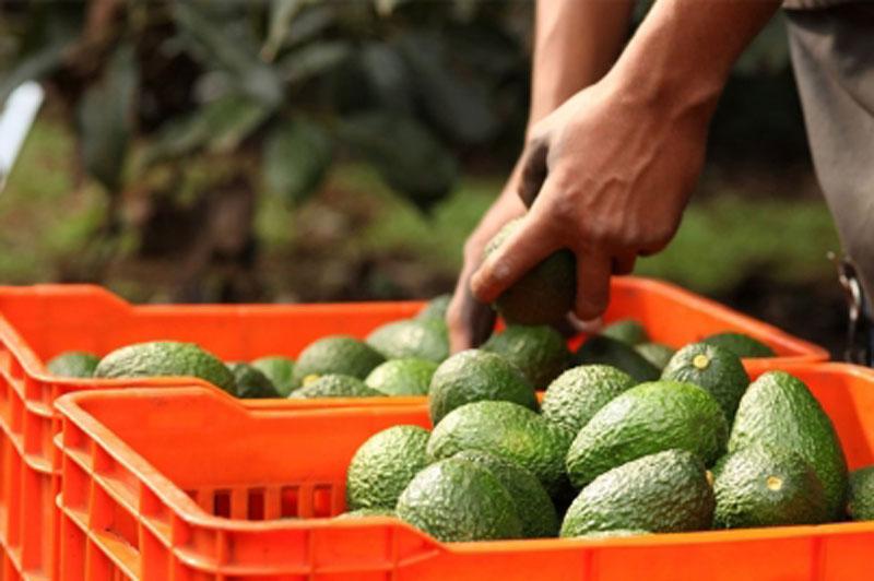 Crecen exportaciones agroalimentarias mexicanas a Canadá 29a9569ba2e8c