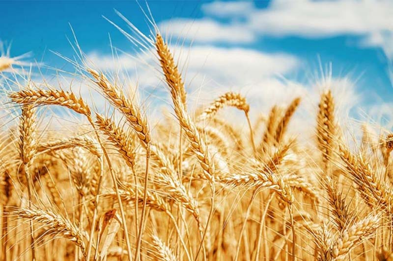 Exportaciones agroalimentarias a Canadá crecen durante este año
