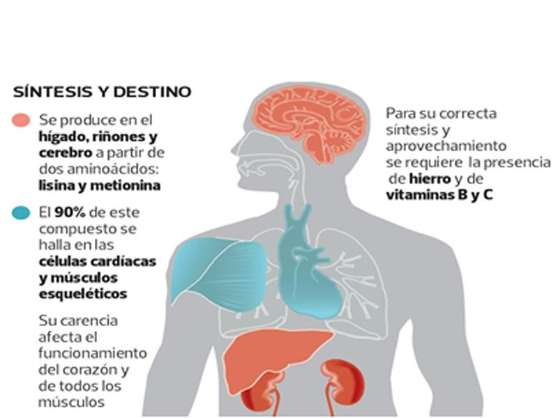 L Carnitina Efervescente Caja x 30 sobres de 4.5 gr. Contiene 1200 mg de L- Carnitina. Beneficios La L-Carnitina transporta los ácidos grasos para ser  ...